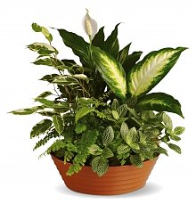 Plants: Serene Retreat Basket