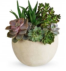 Plants: Desert Beauty Succulent Garden